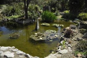 The Pond at Ruth Bancroft's Garden