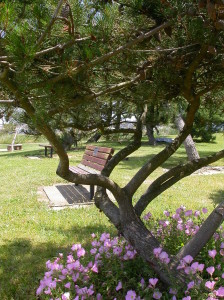 A bench in the eastern section of the park