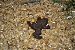 Kelley's Wedding_368Garden Frog